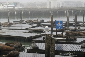 Sea lions at peer 39