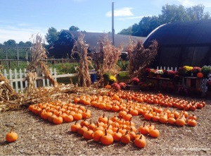 Pumpkins at Brooksby Farm, MA